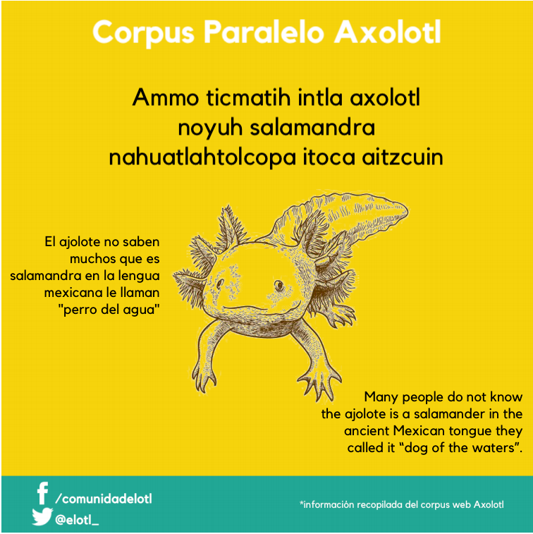 Ammo ticmatih intla axolotl noyuh salamandra nahuatlahtolcopa itoca aitzcuin